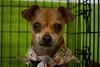 Chloe - 05/29/2011 - Gabby Barrera