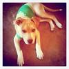 Rocco - 2/25/11 - Mindy Briggs