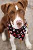 Roxy - 11/20/2011 - Meredith Maples