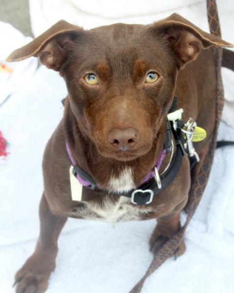 Ella Mae -- 02/16/2012 -- Summer Huggins