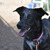Pepper-1/19/12-Kelly Fitzgibbon