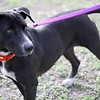 Missy - 1/21/12 - Meredith Maples