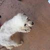Tina - 051312 - VictoriaBrooks