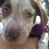 Newton-3/4/2012-Christina Minjares
