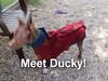 Ducky - 10/8/12 - Karen Hardwick