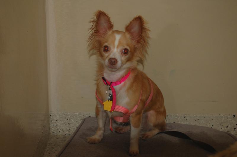 Carmen- 5/14/2012- Joscelyn Milstone