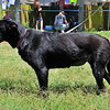 Black Beauty - 4/21/2012 - Craig Peterson