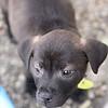 Zena - 01/16/2012 - Meredith Maples