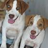 Scout, Sally -- 07/22/2012 -- Summer Huggins