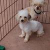 Tina and Pedro- May 12- Joscelyn Milstone