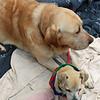Magoo & McGee - January 15, 2012 - Paula Taylor