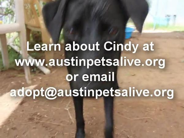 Cindy - 9/17/12 - Karen Hardwick