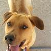 Rhody -- 04/23/2012 -- Summer Huggins