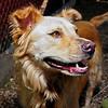 Delilah - 9/28/2012 - Laura Westcott