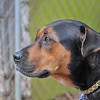 Roxie Mama - 11/11/2012 - Craig Peterson