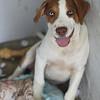 Scout -- 07/22/2012 -- Summer Huggins