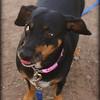 Sausage - 7/15/12 - Brooke