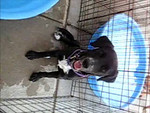 Star - 052412 - VictoriaBrooks - video
