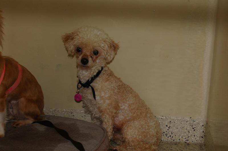 Pedro- 5/14/2012- Joscelyn Milstone