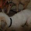 Tina- 5/14/2012- Joscelyn Milstone