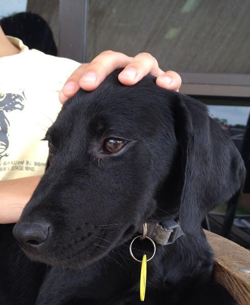 Lady (pup) - 4/30/12 - Antoinette