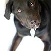 Ribbit -- 05/25/2012 -- Summer Huggins