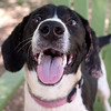 Oreo - 4/17/12 - Laurie Weaver