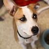 Elvis Pup - 7/29/12 - Meredith Maples