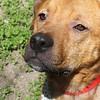 Hank -- 04/23/2012 -- Summer Huggins
