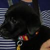 Gonzo- 5/14/2012- Joscelyn Milstone