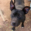 Meredith-Pup - 11/2/12 - Karen Hardwick