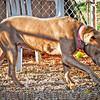 Cinnamon - 11/12/2012 - Laura Westcott