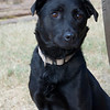 Bailey- 11-30-12-Kelly FItzgibbon