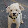 Lambchop- 5/14/2012- Joscelyn Milstone