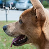 Rex - 4/12/12 - Lance Taylor