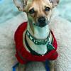 Rommel - 11/1/2011 - Summer Huggins
