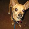 Lily - 05/04/12 - Victoria Brooks