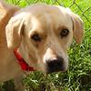 Archie - 10/17/12 - Karen Hardwick