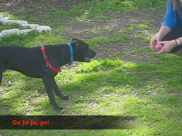 Jo Jo  January 21, 2012, Rusty Kaim