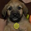 Walter- 5/14/2012- Joscelyn Milstone