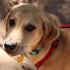 Rocco pup - 9/7/12 - Karen Hardwick