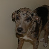 Cherokee - 5/12/12 - Joscelyn Milstone