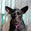 Capi -- 05/10/2012 -- Summer Huggins
