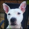 Lacey - 7/12/12 - Brooke