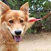 Foxy  - 07/09/2012-  Jordan Zatopek
