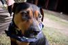 Roxie Mama - 11/11/12 - Melissa Benning