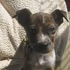 Waylon, January 10, 2012, Rusty Kaim
