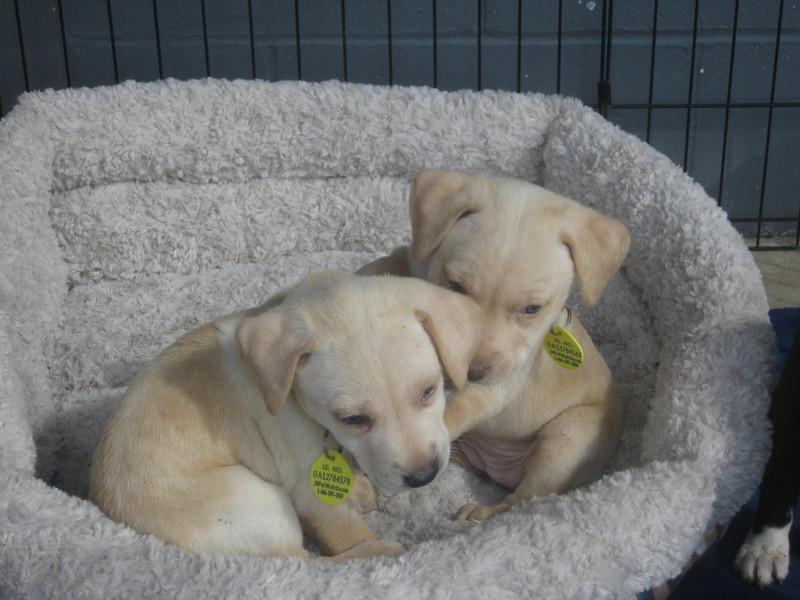 Ophelia and Regina, January 10, 2012, Rusty Kaim