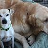 Magoo/McGee - 01/17/2012 - Summer Huggins