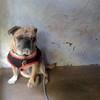 Franky - 11/14/12 - Magelly Serrano